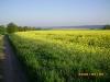 koolzaadveld-marczow-voorjaar-08-c